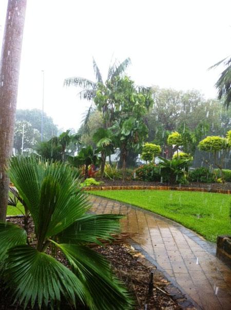 Rainy Darwin