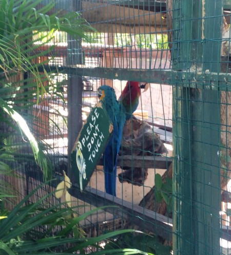 Say Bonjour to the Parrots at Le Tamarin